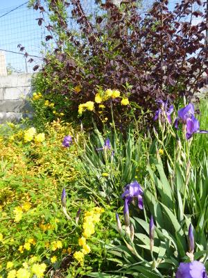 gruppo giallo e viola