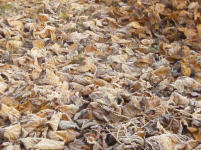 fogliesecche_010117