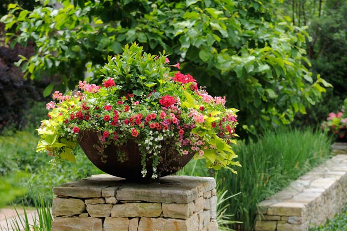 Plant-container-and-flower-pot